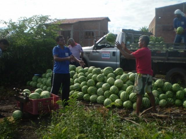Produção dos agricultores ribamarenses é comprada pela Prefeitura.