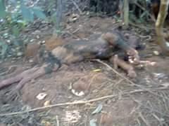 Capelobo mortos por indígenas na cidade de Arame, no Maranhão
