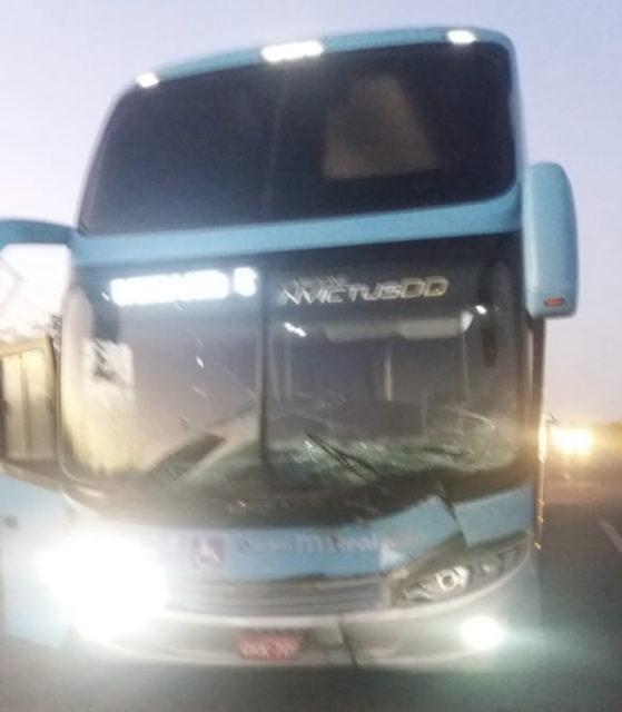 Búfalos provocam dois acidentes graves no Campo de Peris, no ...